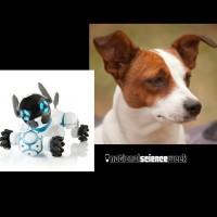 Compare dogs